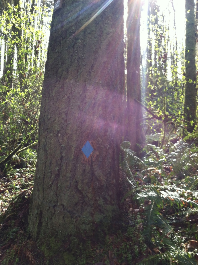 The blue diamond, mark of the Wildwood.